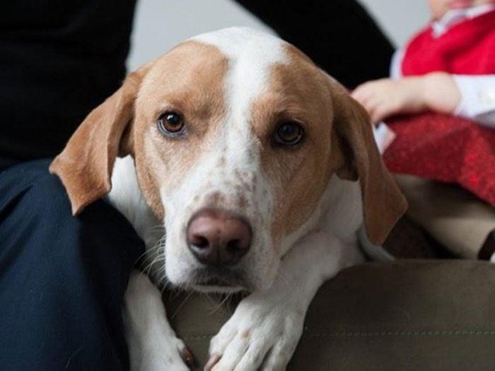 Spencer est un mixte de races de chien.