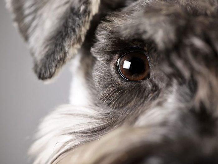 Qui se cache derrière cette race de chien?