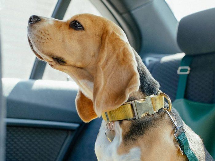 Évitez d'oublier vos animaux domestiques dans la voiture.