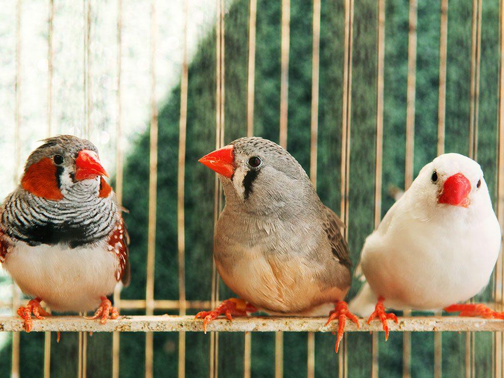 Quelle est la température idéale à l'intérieur de la maison pour les oiseaux?
