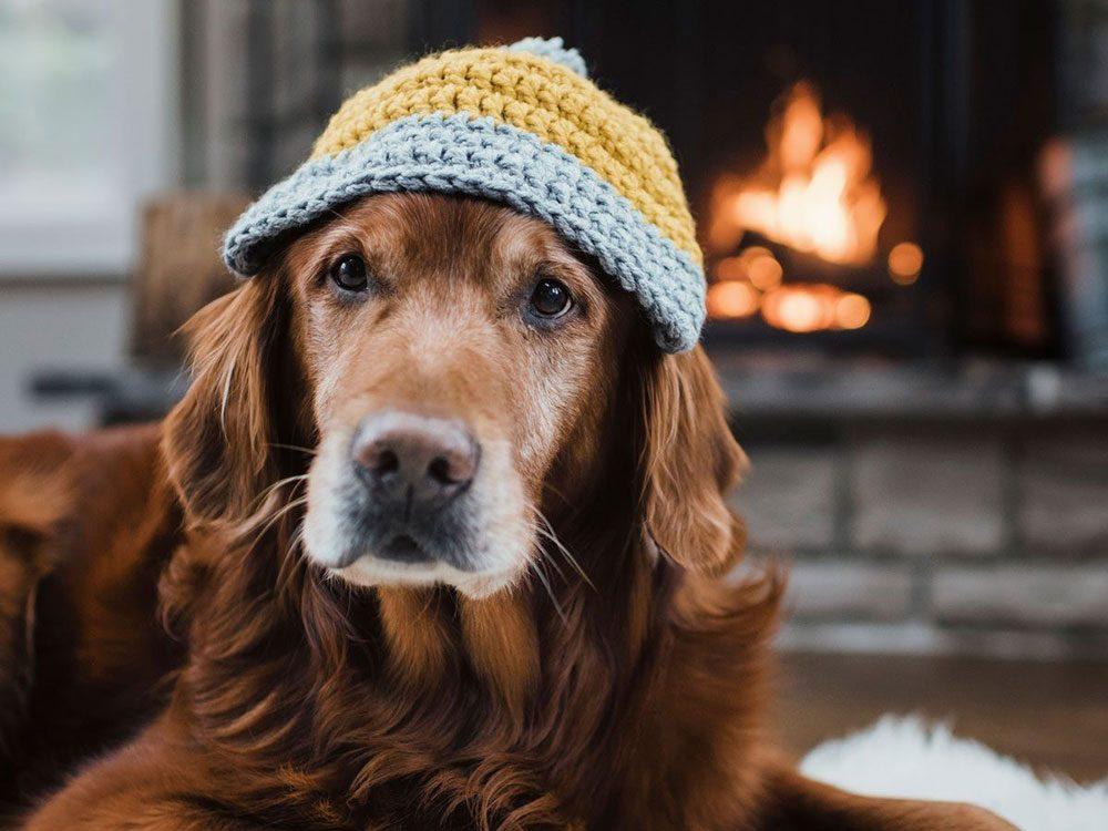 Quelle est la température idéale à l'intérieur de la maison pour les chiens?
