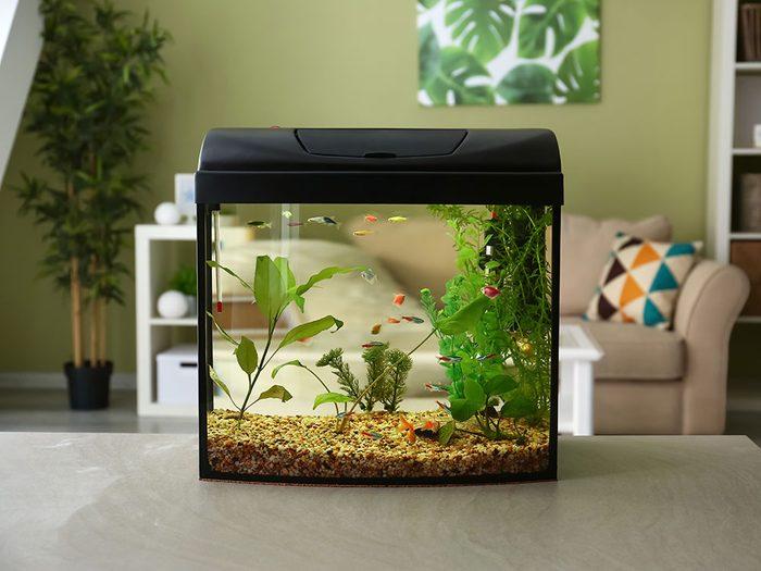 Quelle est la température idéale à l'intérieur de la maison pour les poissons?