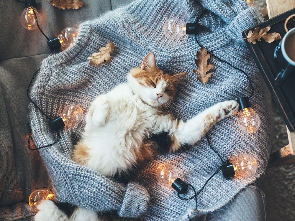 Quelle est la température idéale à l'intérieur de la maison pour les chats?