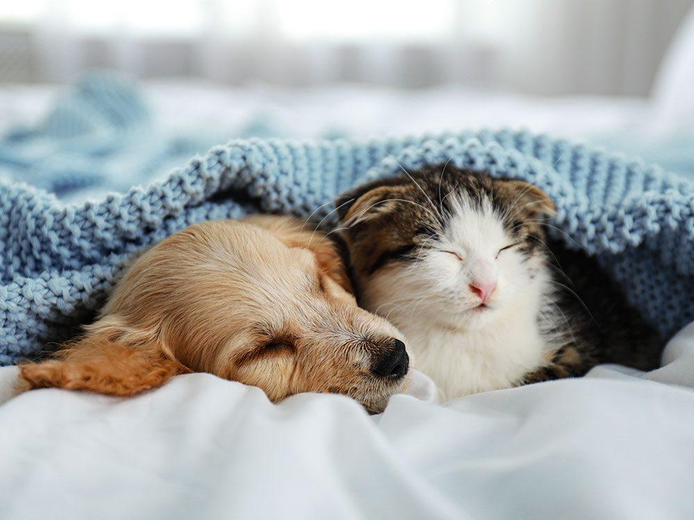 La meilleure température à l'intérieur de la maison pour votre animal de compagnie.