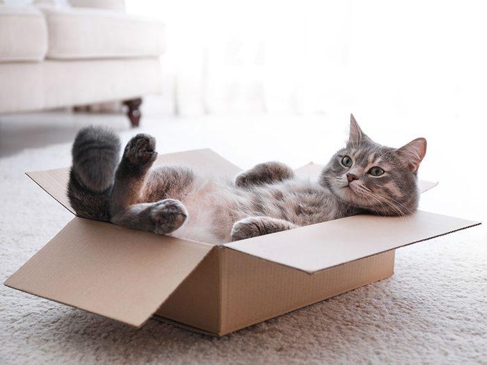 Si les animaux pouvaient parler, le chat vous dirait qu'il se sent en sûreté quand il est à l'étroit.