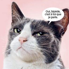 Si les animaux pouvaient parler, le chat vous dirait...