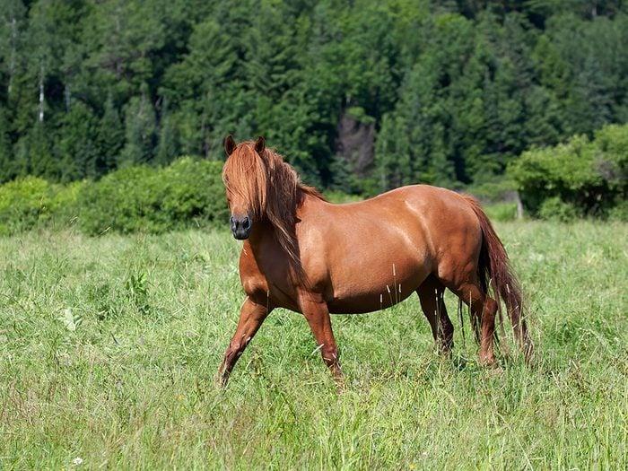 Si les animaux pouvaient parler, le cheval diriat qu'il se souvient de notre humeur de ladernière fois.