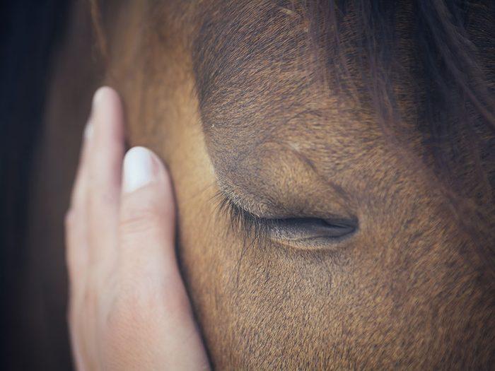 Si les animaux pouvaient parler le cheval dirait qu'il peut deviner notre humeur.