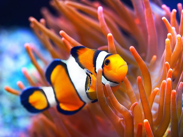 Si les animaux pouvaient parler, le poisson prouverait qu'il a le sens de l'humour!