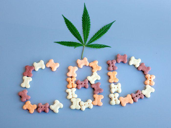 Le CBD dans les produits pour animaux peut venir du cannabis ou du chanvre.