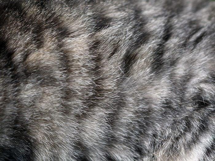 Chats hypoallergéniques: il y a d'autres déclencheurs d'allergies que la fourrure.