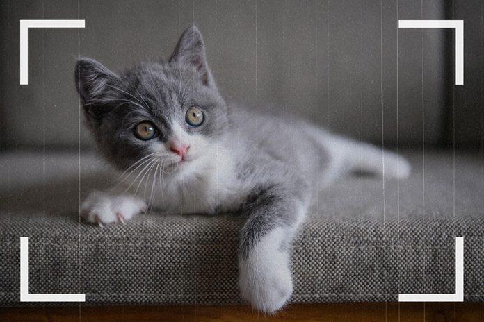 Des caméras de surveillance ont pu capturer des images d'une déclaration d'amour envers les chats.