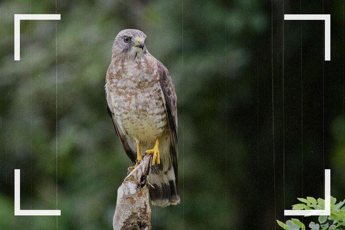 Des caméras de surveillance ont pu capturer des images de faucon.