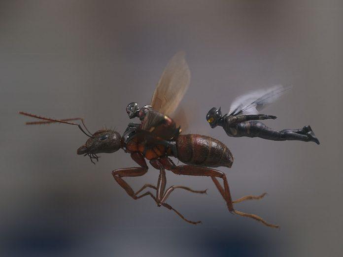 Regardez Ant-Man and the Wasp en 21e pour respecter la chronologie de film Marvel.