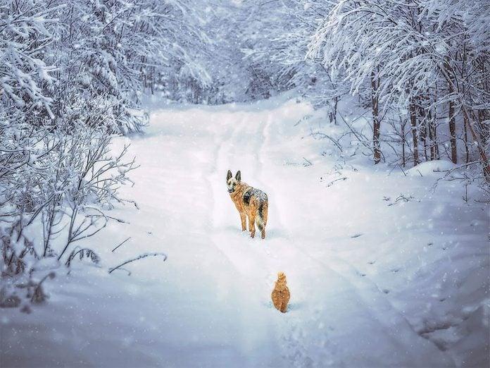 La beauté de l'hiver canadien à travers cette image de Sault Ste. Marie, en Ontario.