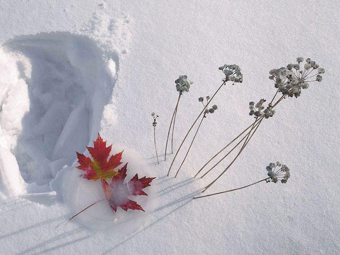 La beauté de l'hiver canadien à travers cette image Saint-Hubert, au Québec.