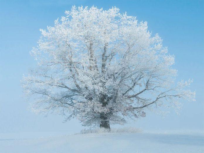 La beauté de l'hiver canadien à travers cette image prise vers Kingston en Ontario.