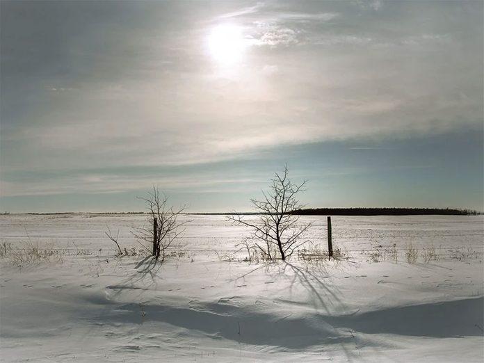 La beauté de l'hiver canadien à travers cette image prise près de St Walburg en Saskatchewan.