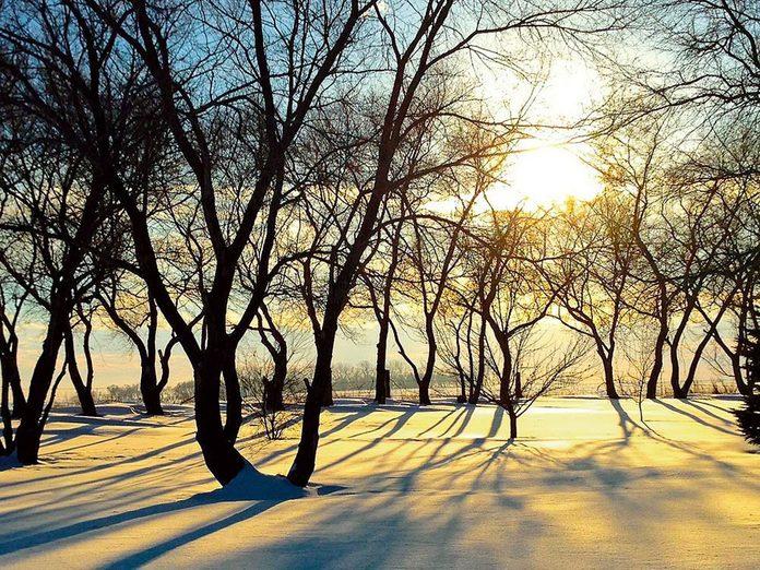La beauté de l'hiver canadien à travers cette image de Brandon au Manitoba.