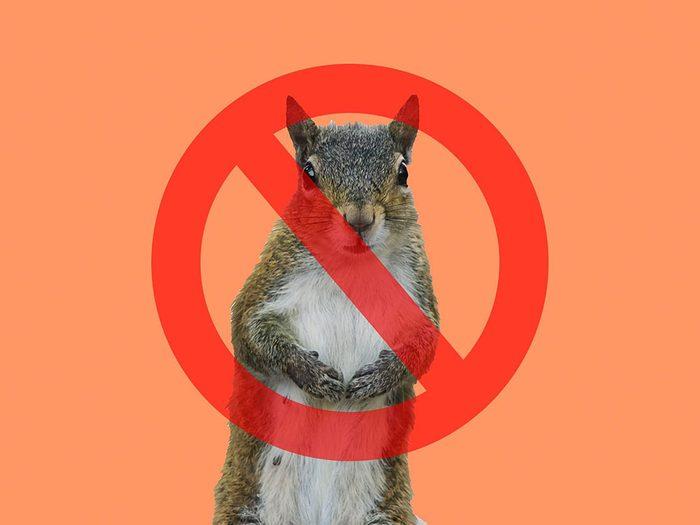 Les écureuils sont interdits à la Maison Blanche.