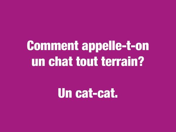 Blagues courtes et drôles: ctomment appelle-t-on un chat tout terrain?