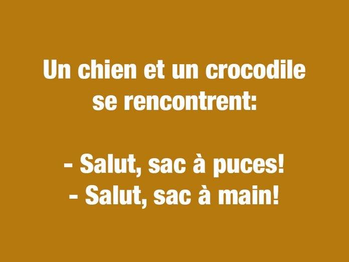 Blagues courtes et drôles: un chien et un crocodile se rencontrent...