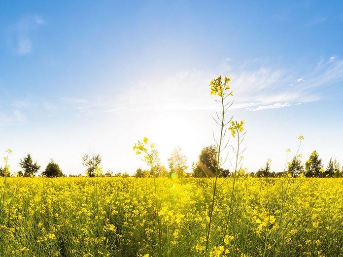 Qu'est-ce que l'équinoxe de printemps?