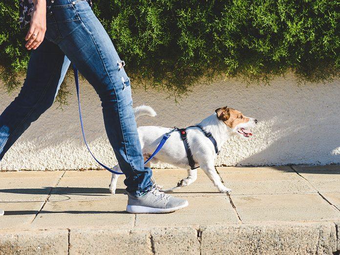 Amenez votre chien pendant votre marche pour brûler plus de calories.