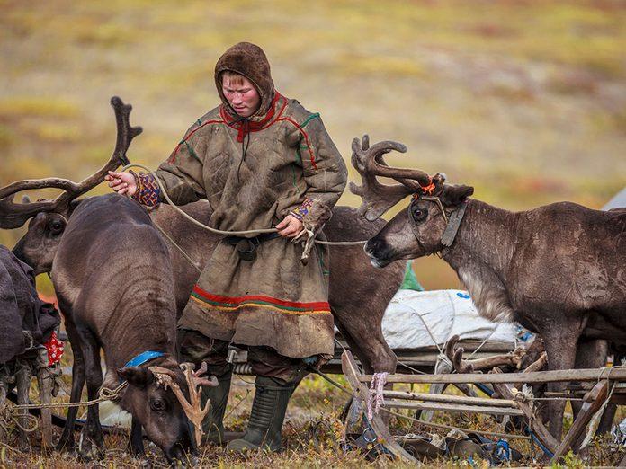 Menace sur les caribous: la préservation des aires de vêlage.