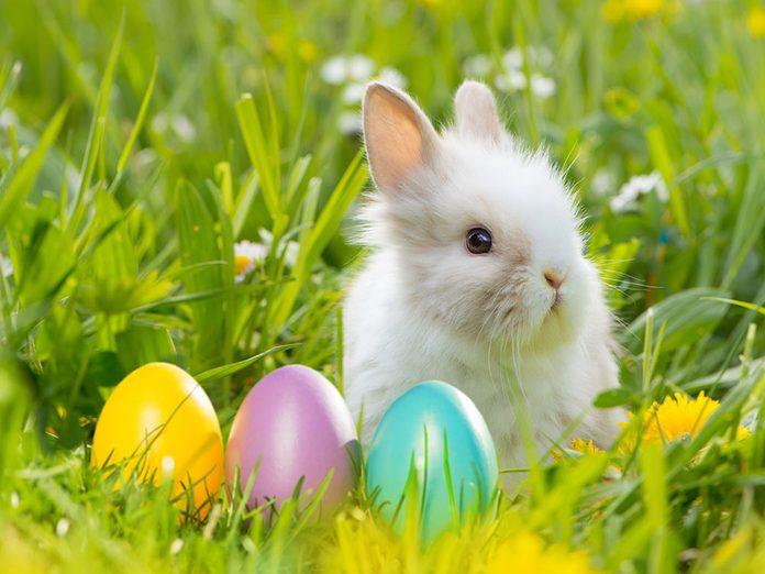 Mythes de l'enfance: cloches et lapins de Pâques.