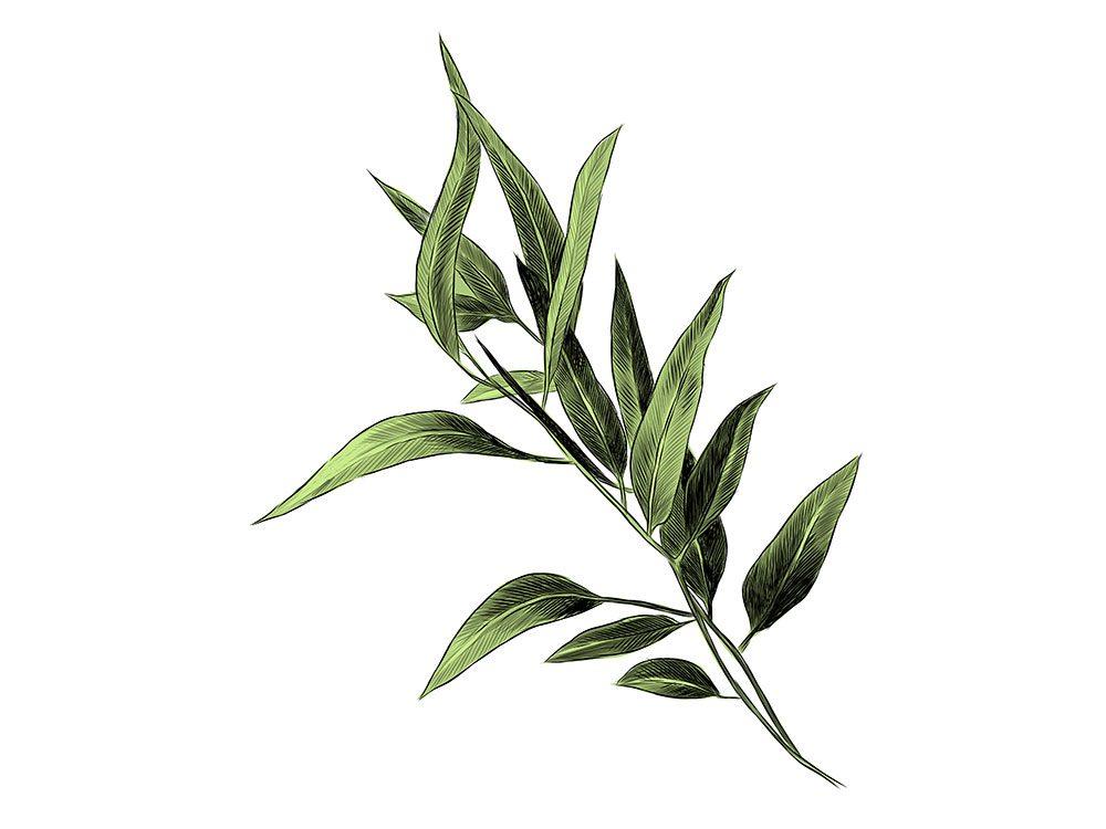 L'eucalyptus est l'un des remèdes maison utilisés en Australie.