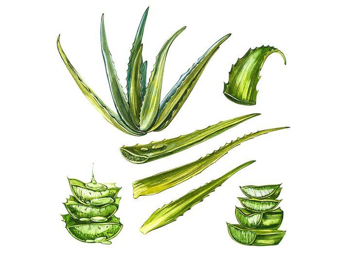L'arnica et l'aloès font partie des remèdes maison utilisés au Mexique.