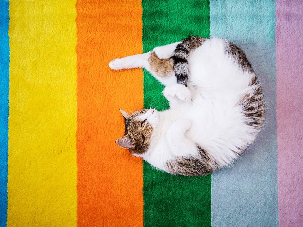 Quelle est la vision des chats?