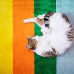 Les chats peuvent-ils voir la couleur?