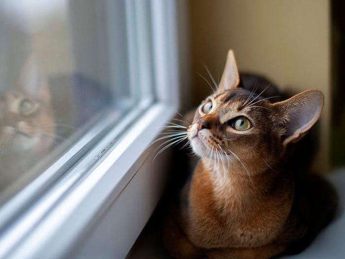 La vision des chats reste extrêmement précise.