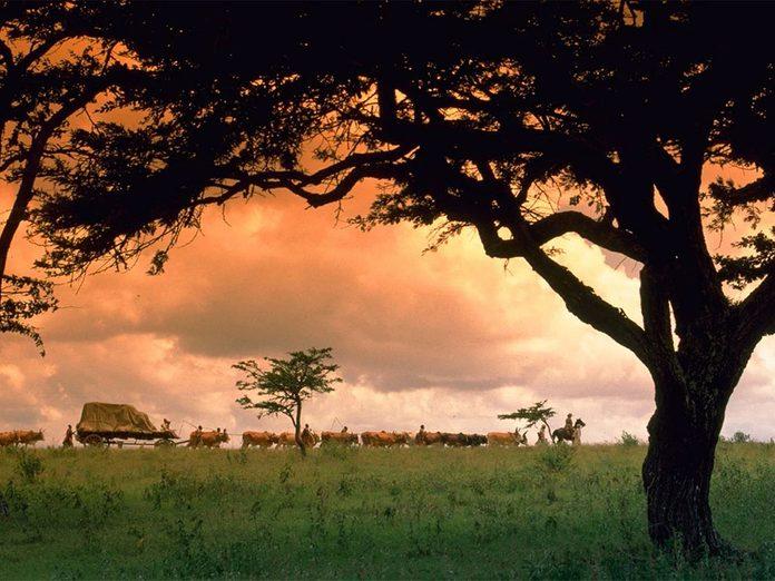 «Out of Africa» a reçu l'un des Oscars du meilleur film.