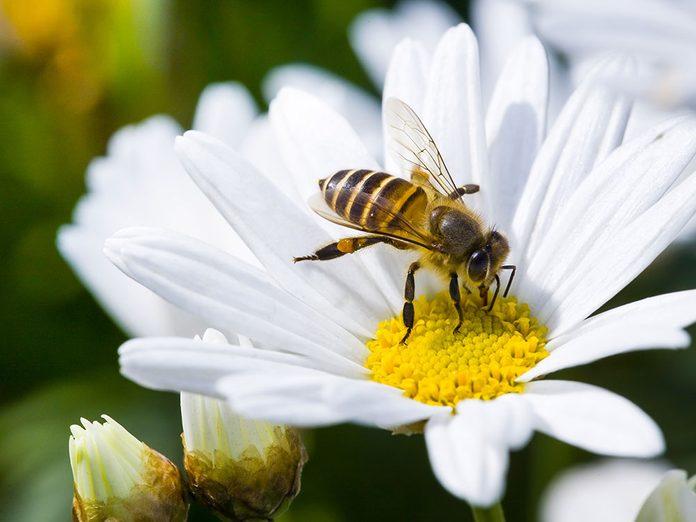 Les abeilles sont menacées.