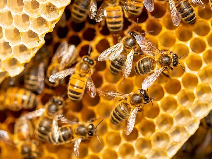 L'apprenti apiculture a enfin pu avoir un essaim.