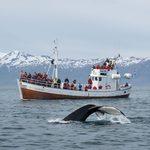 Trêve dans la chasse à la baleine et autres bonnes nouvelles autour du monde