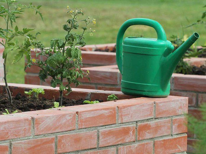 Cultiver les tomates dans des jardinières surélevées et des bacs de plantation.