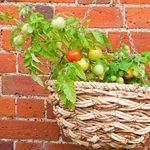 5 façons de cultiver les tomates