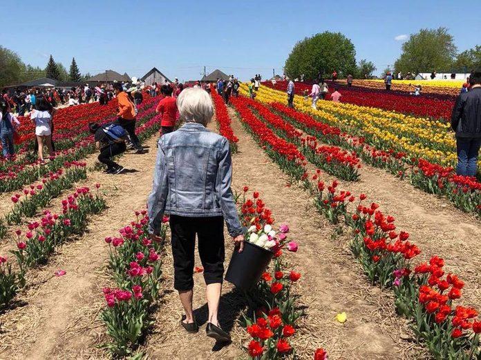 Idées cadeaux: offrez un bouquet de tulipes personnalisé pour la fête des mères.
