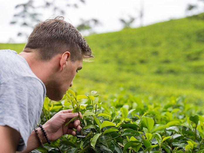 L'entraînement olfactif pourrait préserver l'odorat, à en croire certaines expériences.