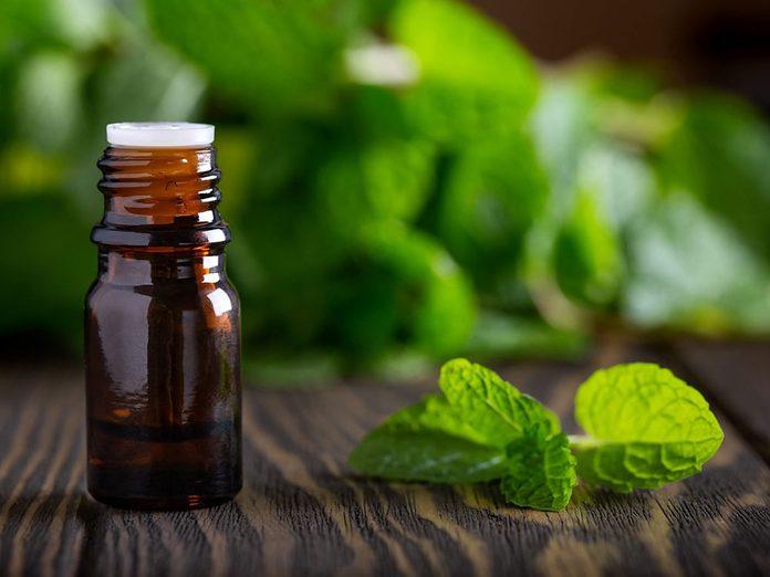 Choisissez des substances odorantes pour repousser les parasites dans la maison.