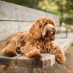 23 races de chien de taille moyenne (parfaits pour vous!)