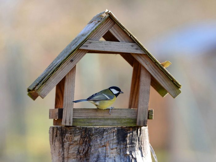 Nourrir les oiseaux avec des coquilles d'oeufs.
