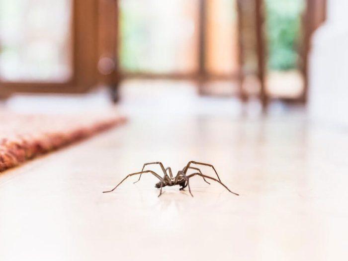 Avoir une foison d'araignées est signe que votre maison risque d'être infestée.