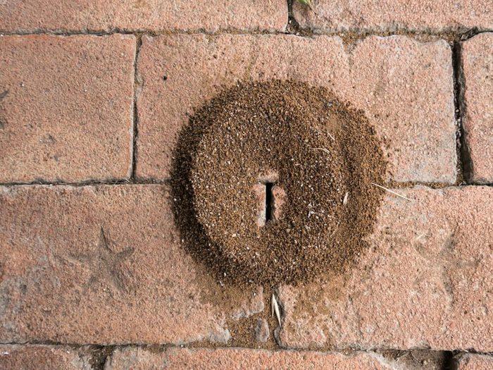 Avoir une fourmilière devant la porte est signe que votre maison risque d'être infestée.