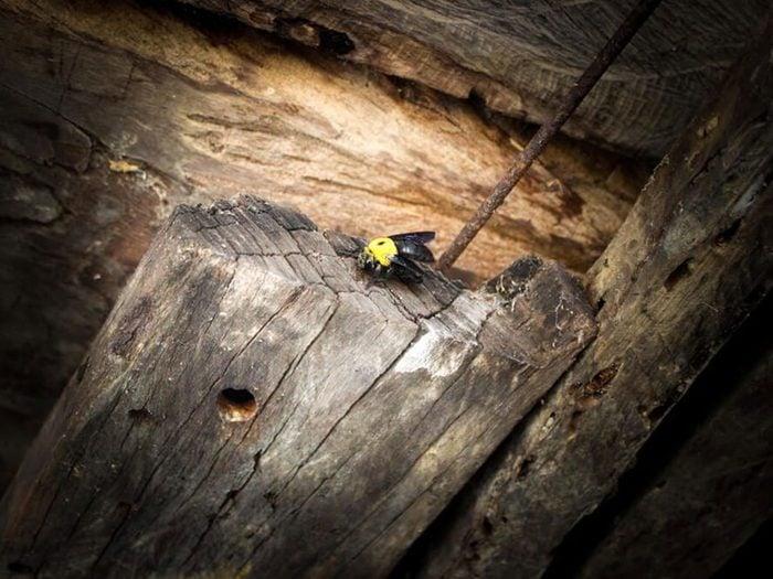 Trouver un petit amas de sciure de bois près de votre terrasse est signe que votre maison risque d'être infestée.