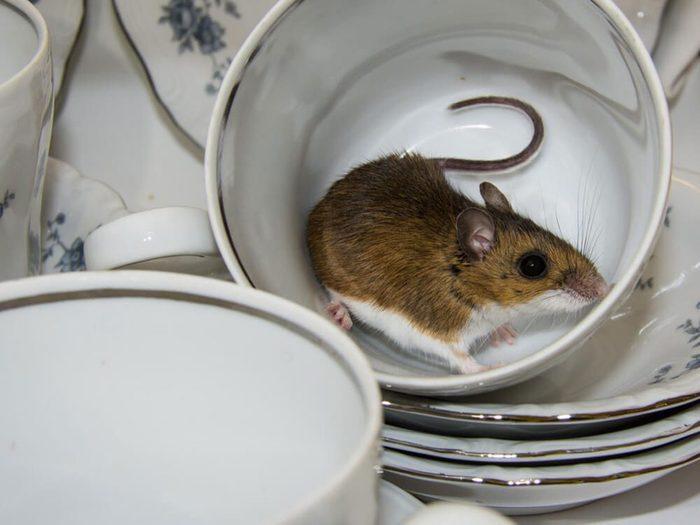 Avoir des graines de sésame sur le comptoir est signe que votre maison risque d'être infestée.